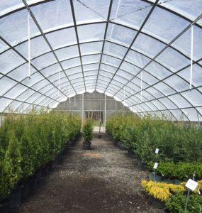 Warrenton greenhouse